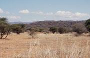 Einen zweiten Zwischenhalt machten wir im Nylsfley Nature Reserve, nahe der Stadt Naboomspruyt. Es ist eines der grössten Überflutungsgebiete Südafrikas, und beherbergt in der Regenzeit ca. 370 Vogelarten Leider war das Vlej bei unserem Besuch trocken.