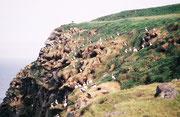 Die 76 m hohe Vogelinsel Ingolfshöfdi kann man bei Ebbe in einem von einem Traktor über den Schlick gezogenen Anhänger trockenen Fusses erreichen. Sie beherbergt eine grössere Kolonie von Papageitauchern (