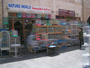 The Bird Market im Souq Waqif (Doha)