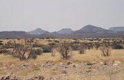 Im Hintergrund die charakteristischen Tafelberge des Damaralandes, die wir auf staubiger, kurviger Kiesstrasse zu überqueren hatten um unser Ziel - Palmwag - zu erreichen, ein Fixpunkt im nordwestlichen Damaraland am Uniab Fluss.