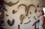 1911wurde die Fundstelle durch Zufall entdeckt. 1931 begannen die systemtischen, wissenschaftlichen Grabungen (unter Leitung von Louis und Mary Leakey). Im Olduvai Museum sind Fundstücke ausgestorbener Tiere (Schafe, Büffel, Elefanten etc.) ausgestellt.