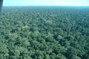 ...in den, auf 500 müM liegenden, tropisch warmen und feuchten Regenwald des 18812 km² grossen Manu Nationalparks, des grösste Regenwaldschutzgebietes weltweit. 1973 erklärte die die UNESCO den Park zum Biosphärenreservat und 1987 zum Weltnaturerbe.
