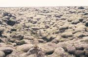 Auch hier waren die Steine bis zum Horizont eingepackt in eine dichte, samtartige Pflanzenschicht aus Moosen und Flechten.