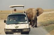 Den Insassen dieses Safaribuses wurde es jedenfalls etwas ungemütlich (man beachte den Chauffeur)….