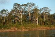 Und über den Fluss Madre de Dios ging es wieder zurück zum Wildlife Center und – nach ein paar unvergesslichen Tagen - bald schon zum Flugplatz Boca Manu und wieder in die Betriebsamkeit der Zivilisation.
