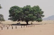 """Unser Zeltplatz im Namib-Naukluft-Nationalpark, im Sossusvlei, einer von Namibsand-Dünen umschlossenen Salz-Lehm-Pfanne (""""Vlei""""), die nur in sehr seltenen, guten Regenjahren Wasser führt. """"Sossus"""" bedeutet """"blinder Fluss"""" in der Sprache der Nama."""