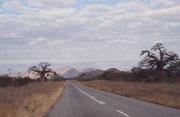 """Auf der Fahrt in Richtung unseres nächsten Etappenziels, dem Aventura Resort in Tshipise, sahen wir diese zwei imposanten Afrikanischen Affenbrotbäumen (Adansonia digitata). Der """"Baobab"""", gehört zu den charakteristischsten Bäumen des tropischen Afrikas."""