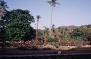 Vegetation auf dem Weg zum Tagungszentrum