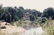 Den ersten Picknick-Halt machten wir am Ufer des Luvuvhu Rivers (einem Zufluss zum Limpopo) im Norden der Krüger NP. Die an einen tropischen Regenwald anmutende Landschaft weckte in uns grosse Lust, in die abenteuerliche Wildnis des Parks einzutauchen.