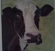 Kuh,Pastell,53x53,2009 (Privatbesitz)