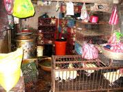 Geflügelhändler auf einem Nightmarket- Das macht Appetit...