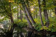Winnaar categorie Natuur in de provincie Utrecht: Fotograaf Rob Benningen