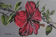 Hibiscus - Olio su tela - 20x30 - 2011