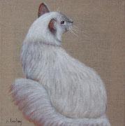 """Chat angora"" - acrylique - 30 x 30 cm"