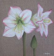 """Amaryllis"" - acrylique - 20 x 20 cm"