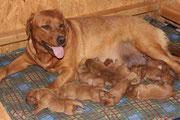 Nun sind sie schon 1 Woche alt.