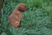 Mit 2 Monaten bin ich schon so groß wie das Gras.