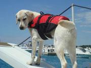 So Stella, dann nehme ich dich mal mit auf mein Boot.