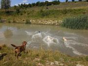 Mit Karacho und weitem Sprung geht es ins Wasser.