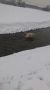Im Winter auf dem trockene Weg laufen - niemals, wenn es daneben einen erfrischenden Bach gibt.