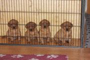 Die 4 hinter Gitter