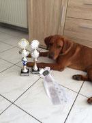 17.07.2016: Pfalz Sieger und Olympic Winner 2016 und zweiter in Best of Class. Zudem nationaler und internationaler Champion der Jüngsten.