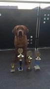 Völklingen: Luxembourg-Sieger 2016, Schönster Retriever Platz 1, Best of Class SG1 Hündin Platz 1 und belegte im Hunderennen den 1. Platz in 5,22 Sekunden auf 40 Meter.