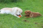 Spielen mit Stella ...