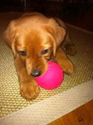 Ballspielen ...