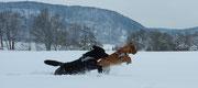 2 Schneerennlabbis - Utah und Pollo
