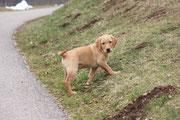 Der kleine Marley erobert das Donautal.