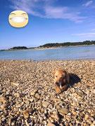 Am Strand von Kroatien
