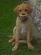 Mein Ball, ...
