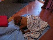 Winter, es ist aber auch ziemlich kalt für einen Labrador.