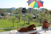 So cool , habe meinen eigenen Sonnenschirm.