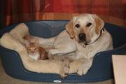 Sich mit einer Katze ins Körbchen legen - niemals, Katzen werden gejagt.