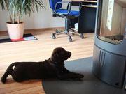 Ist das ein langweiliges Hundeprogramm.
