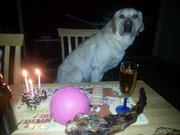 26. Mai 2013: 3. Geburtstag von Sammy und dem B-Wurf von Stella.