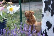 Blumen - wie die wohl schmecken?