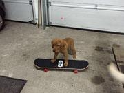Skateboard für's Gassi-Gehen.
