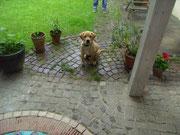 Wollt ihr auch in meinen Garten?