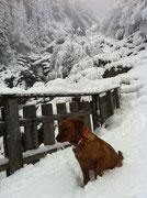 März 2014: Nochmals in den Schnee in den Bergen - mein Paradies.