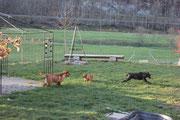 Garteneroberung mit Gaya und Ranger.