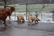 Winterausflug von Marley und Murphy mit Papa Jonny und Ranger.