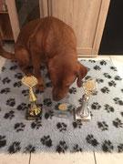 Und ganz bescheiden möchte ich noch erwähnen, dass ich 2x SG1 erhielt und bei Best of Class den 1. Platz belegte.