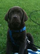 Cooper's Bruno