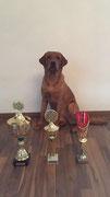 Wannweil: Europa-Sieger 2016, Schönster Retriever Platz 1 und Best of Class Junghunde Platz 3.