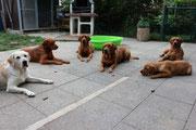 August 2014: Immer diese Vorurteile - Labradore sind nicht verfressen.