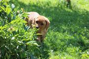 Eroberung des Gartens