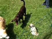 Heute in der Hundeschule: Der ist zu klein ...